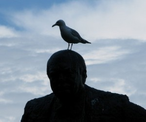 gull-on-head