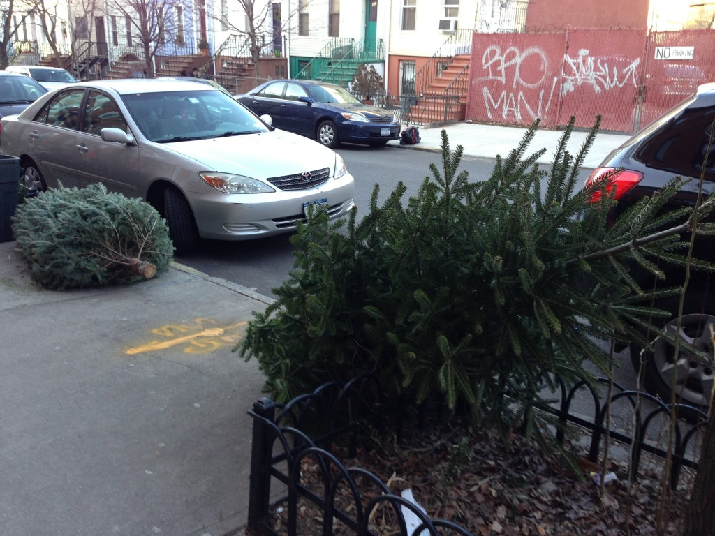 Discarded Christmas dreams in Brooklyn. I mean trees. Discarded Christmas trees in Brooklyn.