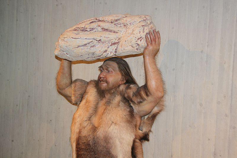 penis la neandertali)