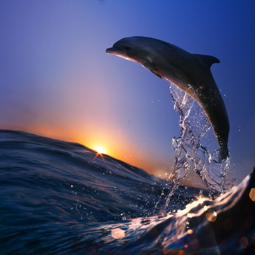 dophin sci fi