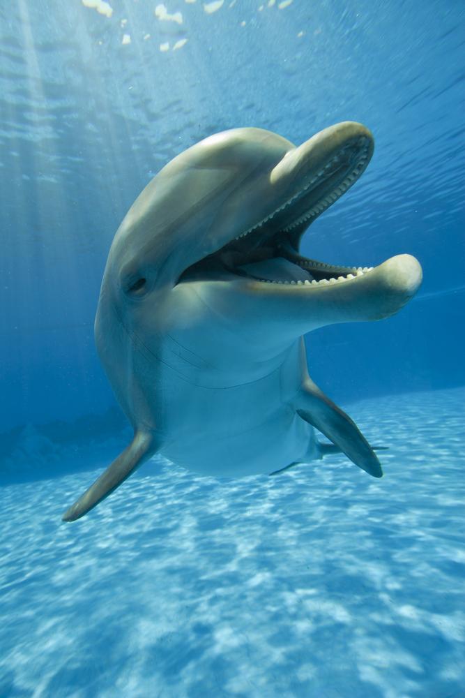 Dolphins   National Aquarium - WATERblog