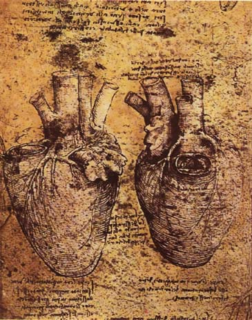 Heart_and_blood_vessels_by_da_Vinci (1)