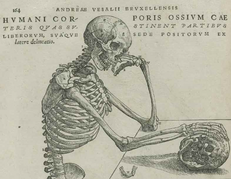 Vesalius for post