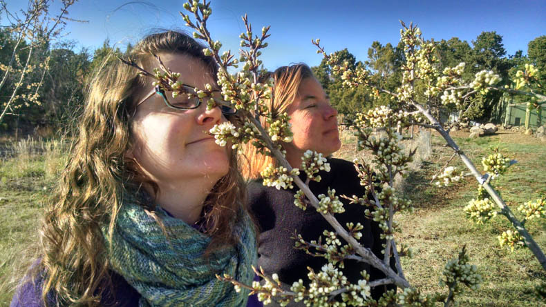 Two women sniff a fruit tree.