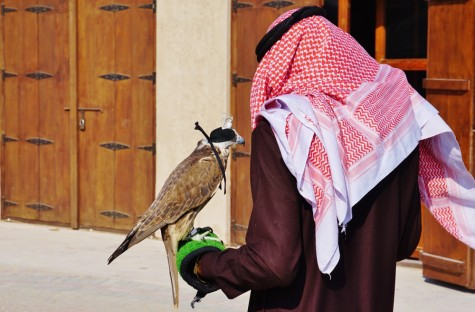 shutterstock falcon