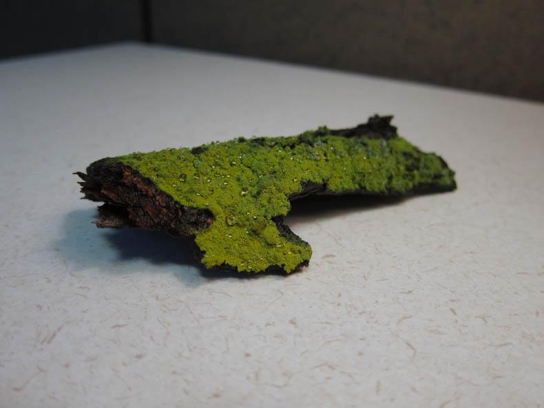 Still life: Bright green lichen on dark brown bark.