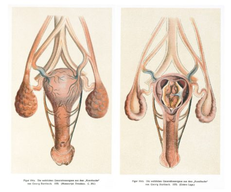 [Image: Image_of_the_vagina_uterus_and_womb_Well...75x396.jpg]