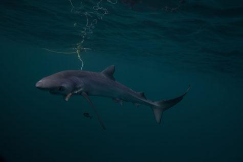 sharkfishing0012