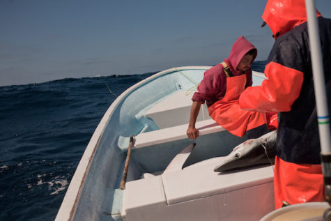 Mexico Shark Fin