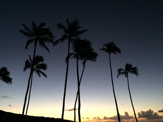 Palm trees, appearing dark against a sunrise