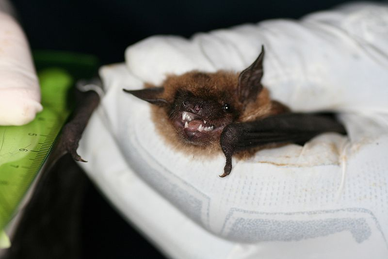 A bat in a white gloved hand