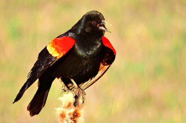 The Last Word On Nothing   Snark Week: All Blackbirds Should