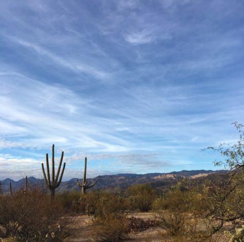 Desert-landscape-cactus