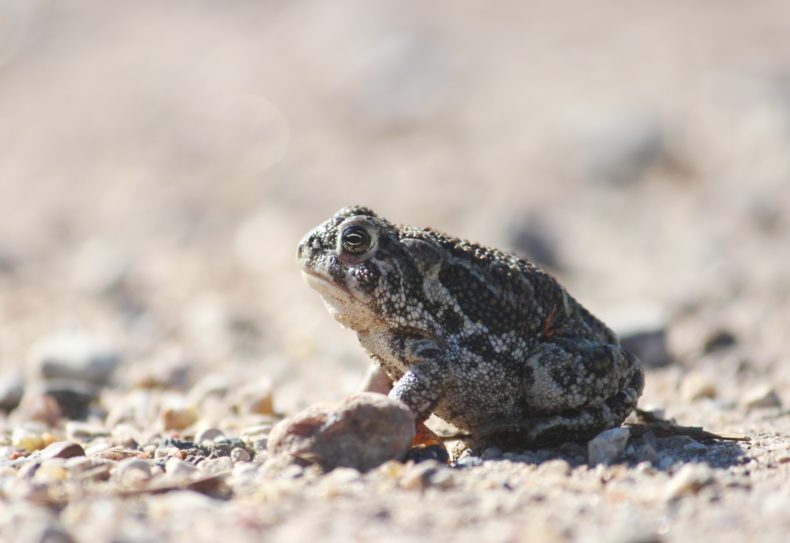 The Last Word On Nothing | In the Muddy Shallows, the Frogs Are Singing. Is That OK?